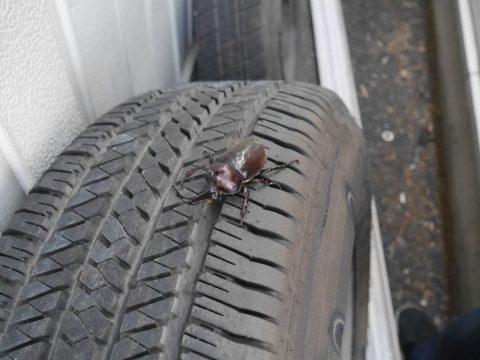 タイヤにカブトムシ